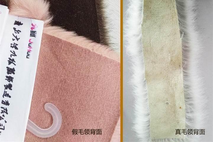 396 -《真毛领子、假毛领子怎么辨别?小心獭兔毛领子替换水貂毛领子!》